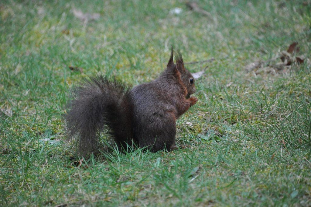 landal heideheuvel ervaring eekhoorn