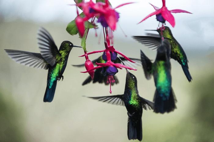 birds costarica
