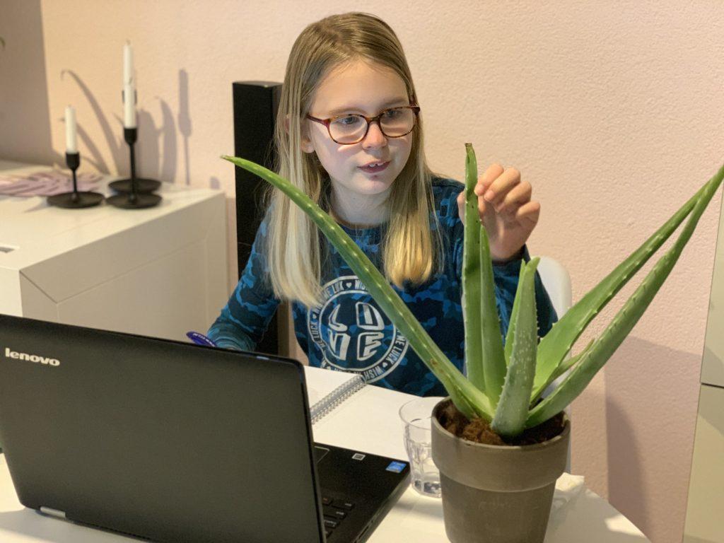 kinderplant aloe vera