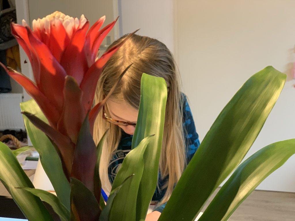 kinderplant bromelia