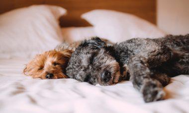 slaaphouding hondjes