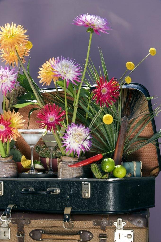 BBH, Thema's Mexico en Japan, The Gardeners, The Wunderkammer