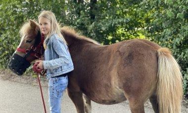 pony naar de wei